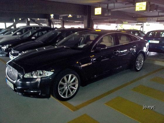 Jaguar_Choice
