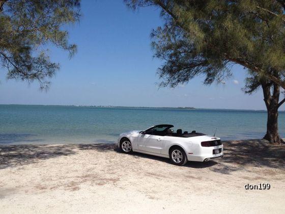 Florida 2014 Mustang Conv