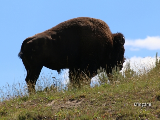 k-Yellowstone NP 5