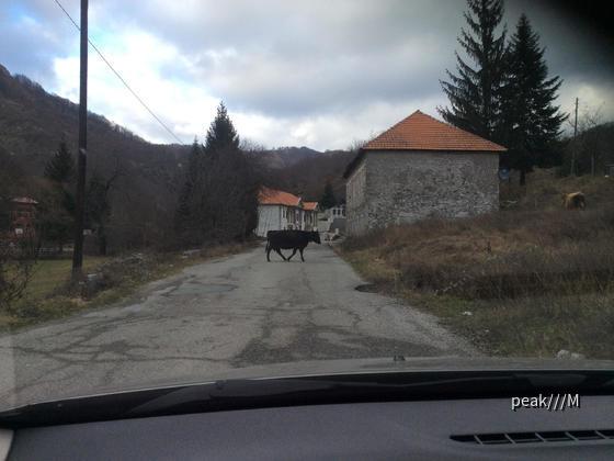 Sandero von Avis Podgorica